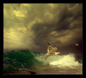 FOTOvine-furtuna-irene-B